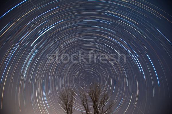 Polaris and star trails over the trees Stock photo © shihina