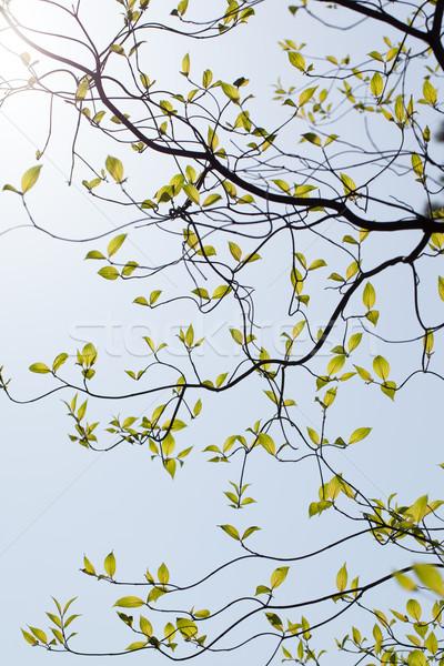 Frescos hojas Florida sol naturaleza Foto stock © shihina