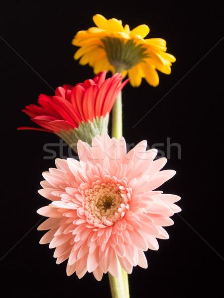 3  美しい デイジーチェーン 花 ピンク 赤 ストックフォト © shihina