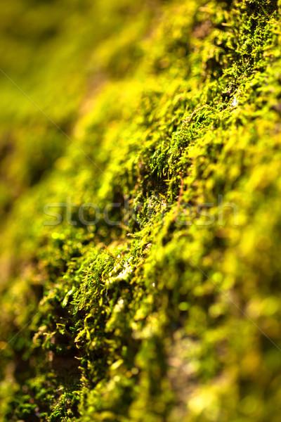Green moss texture Stock photo © shihina