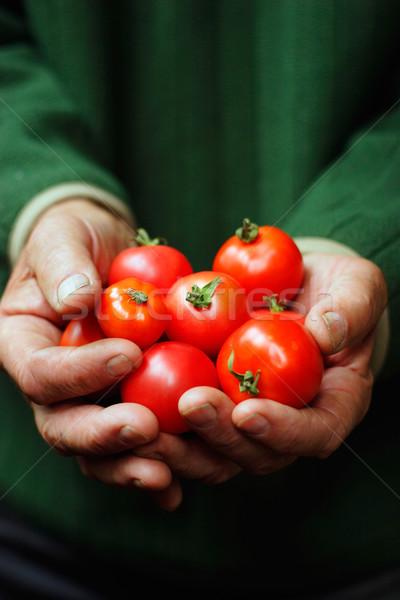 Tomates mains main soins humaine Photo stock © shyshka