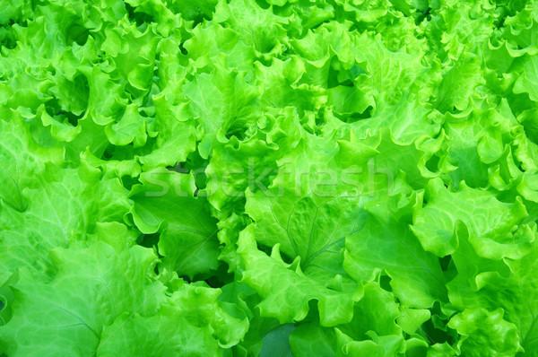 Salata bir ilk bahar sebze gıda Stok fotoğraf © sibrikov