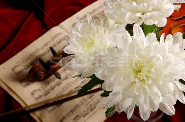 Hegedű ősi hangszer koncert siker hang Stock fotó © sibrikov