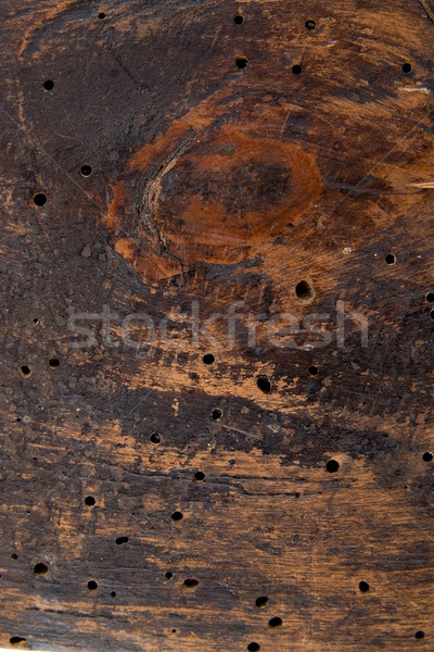 structure of an old tree. Stock photo © sibrikov