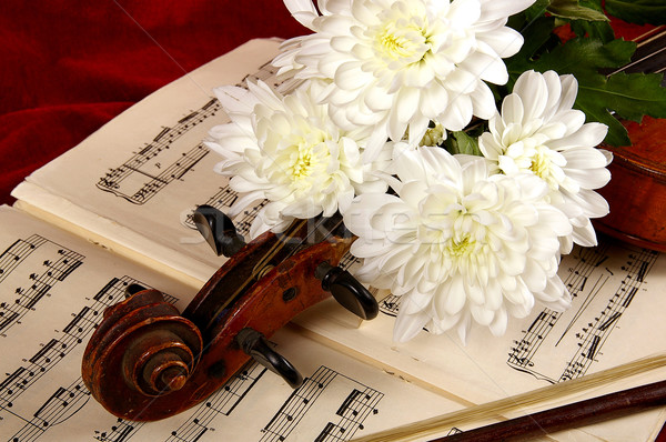 The violin  Stock photo © sibrikov
