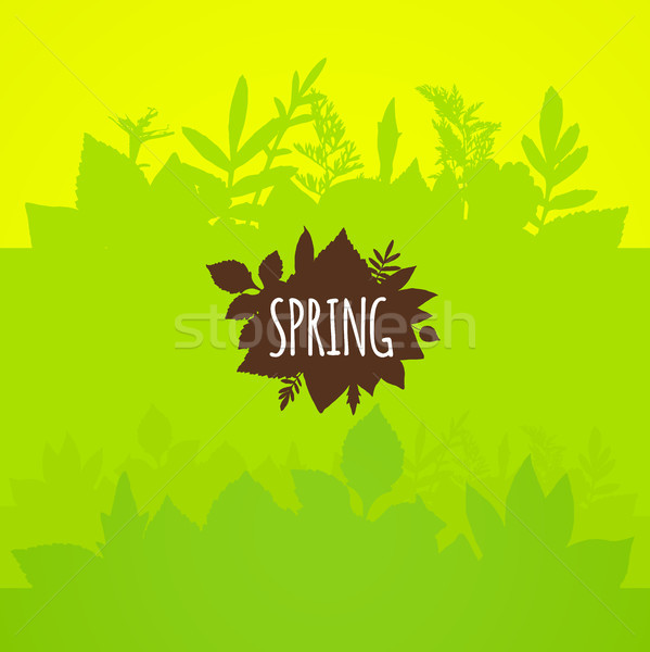 Flat spring background, bright green leaves Stock photo © sidmay