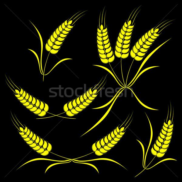 Ingesteld oren geïsoleerd tarwe zwarte gras Stockfoto © Silanti
