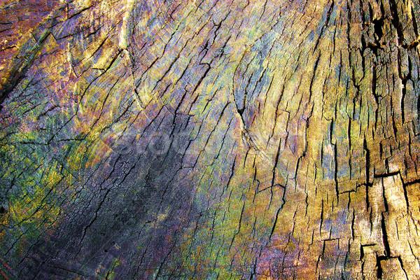 Motley texture of a wood Stock photo © Silanti
