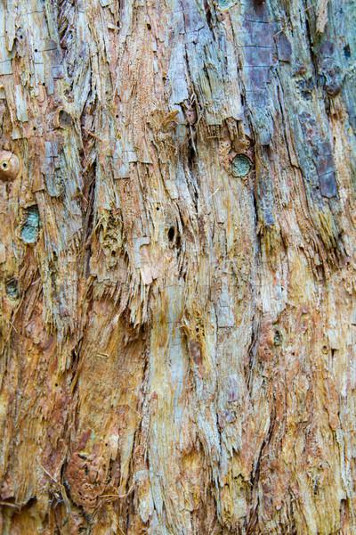 Papel casca abstrato vertical colorido Foto stock © silkenphotography