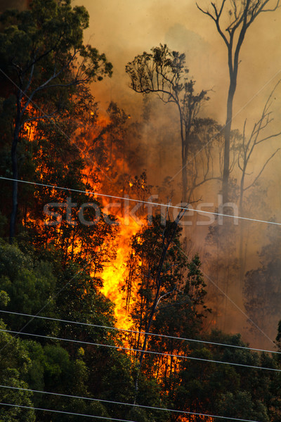 Bushfire near Power Lines Stock photo © silkenphotography
