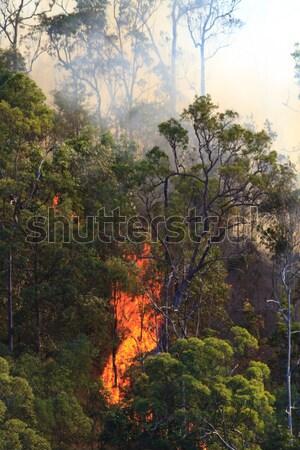Incendios forestales ardor llamas fuego australiano Bush Foto stock © silkenphotography