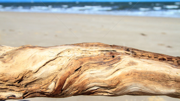 Driftwood on the beach Stock photo © silkenphotography