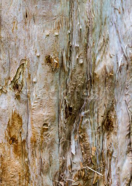 Closeup of Yellowed Bark Stock photo © silkenphotography