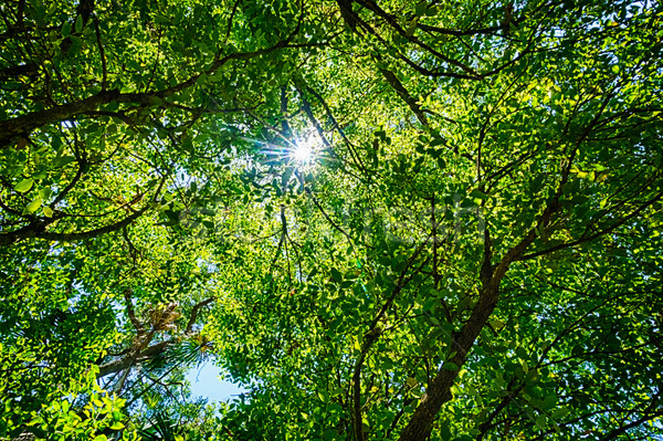 Green Leafy Background with Sunburst Stock photo © silkenphotography