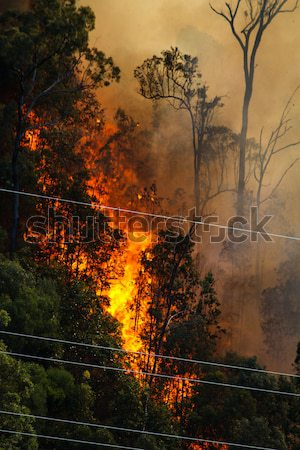 Burning Forest near Power Cables Stock photo © silkenphotography