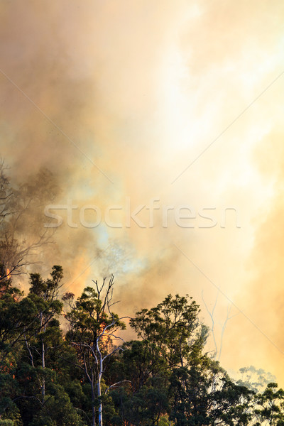 Blinding Fire Smoke Stock photo © silkenphotography