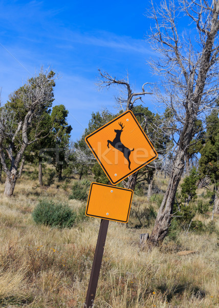 Cervo cartello stradale giallo allarme selvatico movimento Foto d'archivio © silkenphotography
