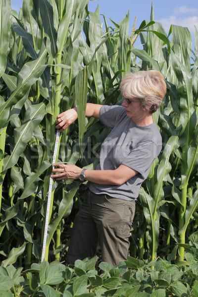 Agrártudomány női mezőgazdasági szakértő minőség kukorica Stock fotó © simazoran
