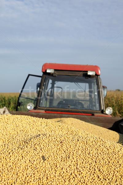 Szójabab aratás halom szója bab traktor Stock fotó © simazoran