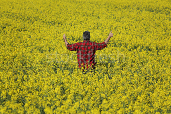 Farmer examining blossoming rapeseed field and gesturing Stock photo © simazoran