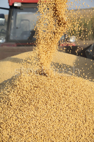Soy harvest Stock photo © simazoran