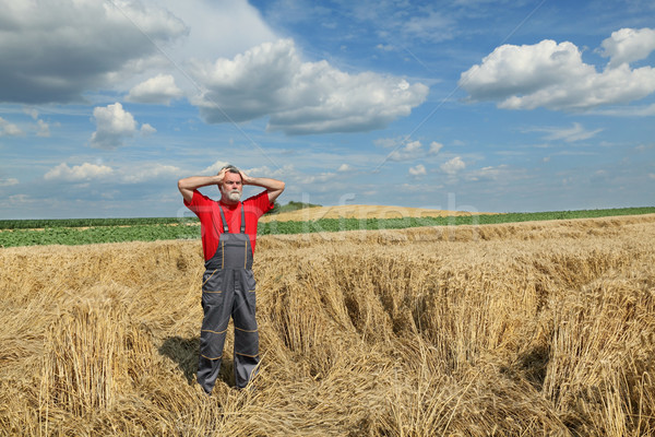 Agriculture, farmer gesture in wheat field Stock photo © simazoran