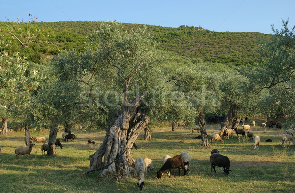 Agriculture Stock photo © simazoran