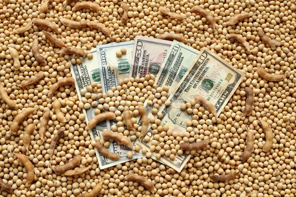 Mezőgazdasági szójabab dollár pénz halom szója Stock fotó © simazoran