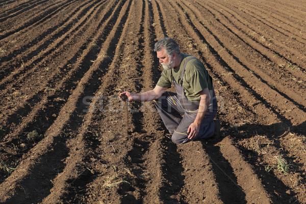 Gazda megművelt mező mezőgazdaság megvizsgál minőség Stock fotó © simazoran
