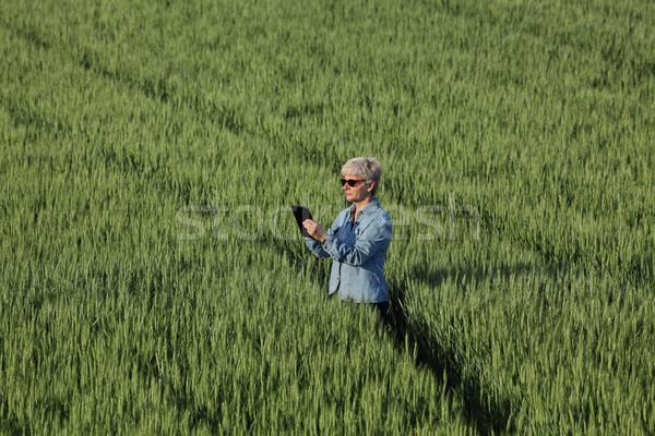 Agriculture, female farmer examining wheat plant in field Stock photo © simazoran
