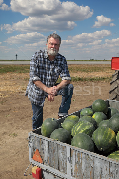 Watermelon fruit at trailer and smiling farmer Stock photo © simazoran