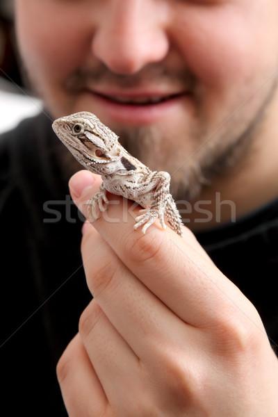 ペット 小さな あごひげを生やした 龍 トカゲ 人の手 ストックフォト © simazoran