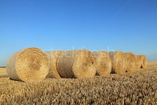 Foto d'archivio: Paglia · campo · di · grano · raccolto · bale · cielo · sereno
