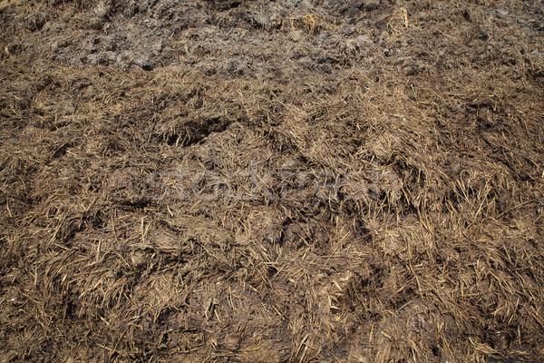 Natuurlijke meststof koe veld hoop klaar Stockfoto © simazoran