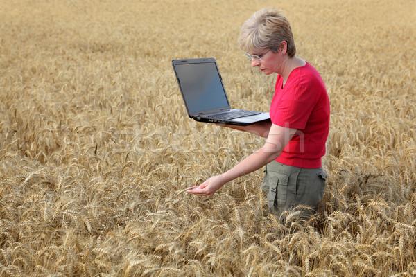 Stockfoto: Landbouw · agrarisch · expert · kwaliteit · tarwe