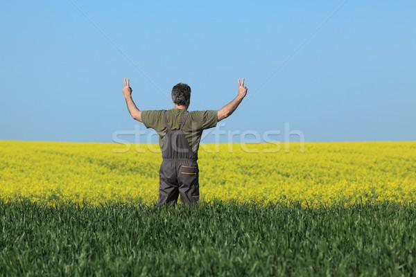 Farmer examining blossoming rapeseed and wheat field and gesturi Stock photo © simazoran