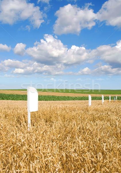 Deneysel hazır hasat erken yaz Stok fotoğraf © simazoran