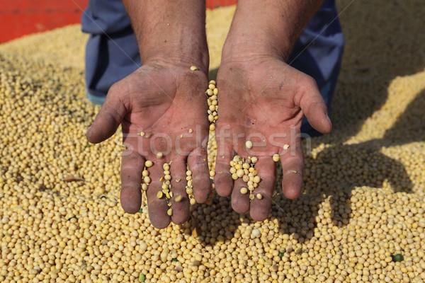 Soya hasat soya çiftçiler boş eller Stok fotoğraf © simazoran
