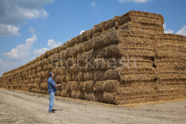 Jeans fardo palha campo grande Foto stock © simazoran