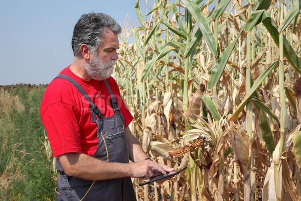 Landbouwer beschadigd mais veld plant tablet Stockfoto © simazoran