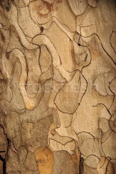 Tree bark Stock photo © simazoran