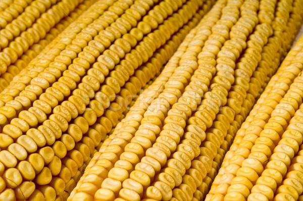 Corn cob Stock photo © simazoran