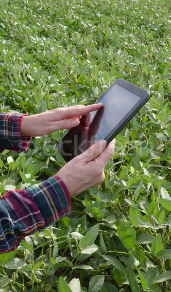 фермер соя боб растений области Сток-фото © simazoran