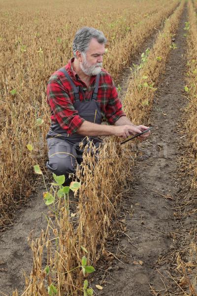 農家 調べる 大豆 豆 植物 フィールド ストックフォト © simazoran