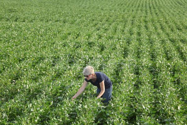 Női gazda megvizsgál zöld szójabab növény Stock fotó © simazoran