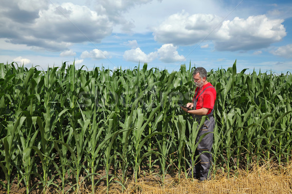 Farmer or agronomist inspect corn field using tablet Stock photo © simazoran