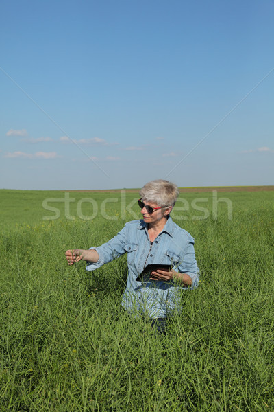 Female farmer inspecting rapeseed crop in field Stock photo © simazoran