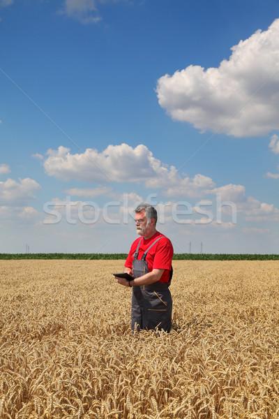 Farmer or agronomist inspect wheat field Stock photo © simazoran