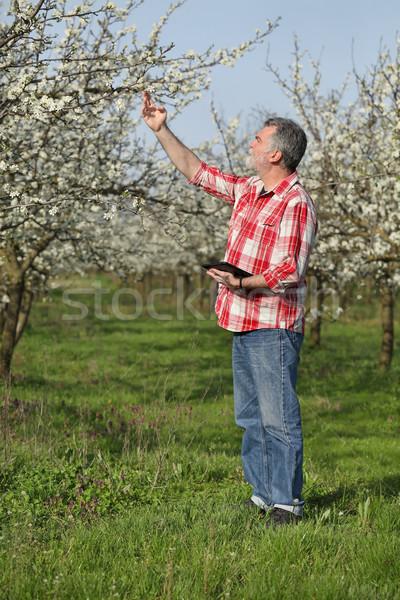 Stockfoto: Landbouwer · pruim · boomgaard · bomen