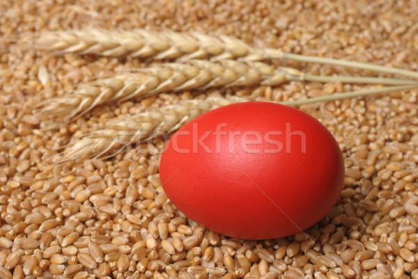 Pâques rouge œuf de Pâques blé alimentaire Photo stock © simazoran
